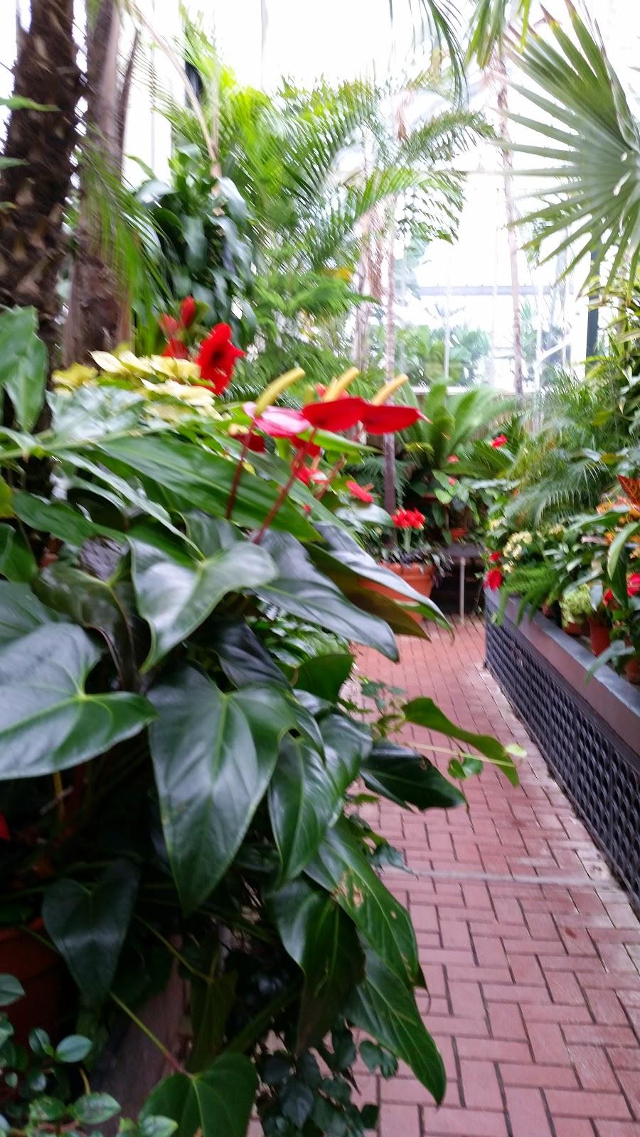 Tropical Plants 7.jpg