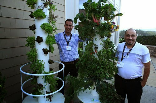 vertical gardens3.jpg