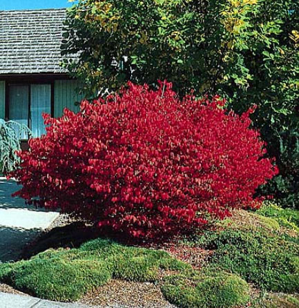 burning-bush.jpg