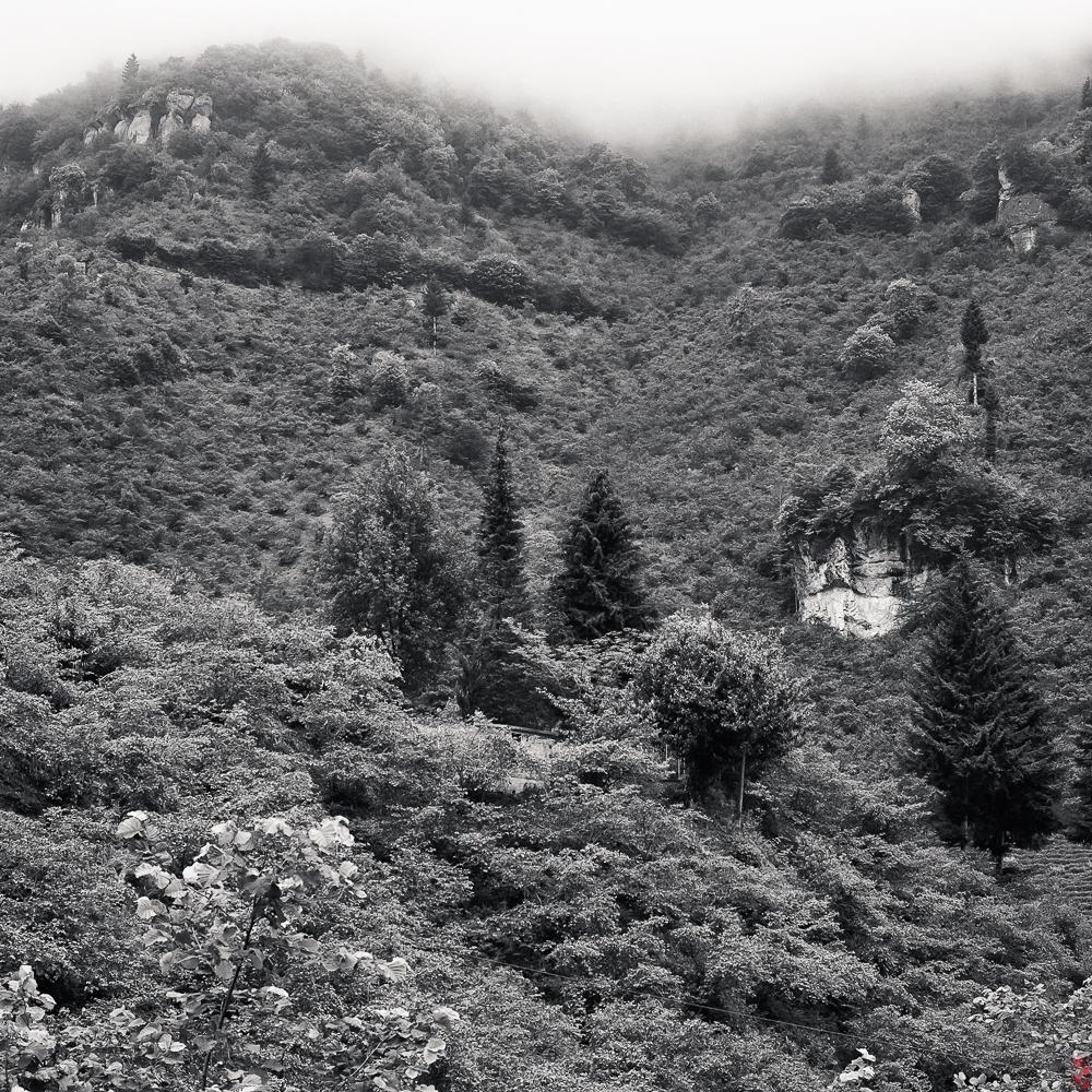 Tea gardens, Trabzon, Turkey
