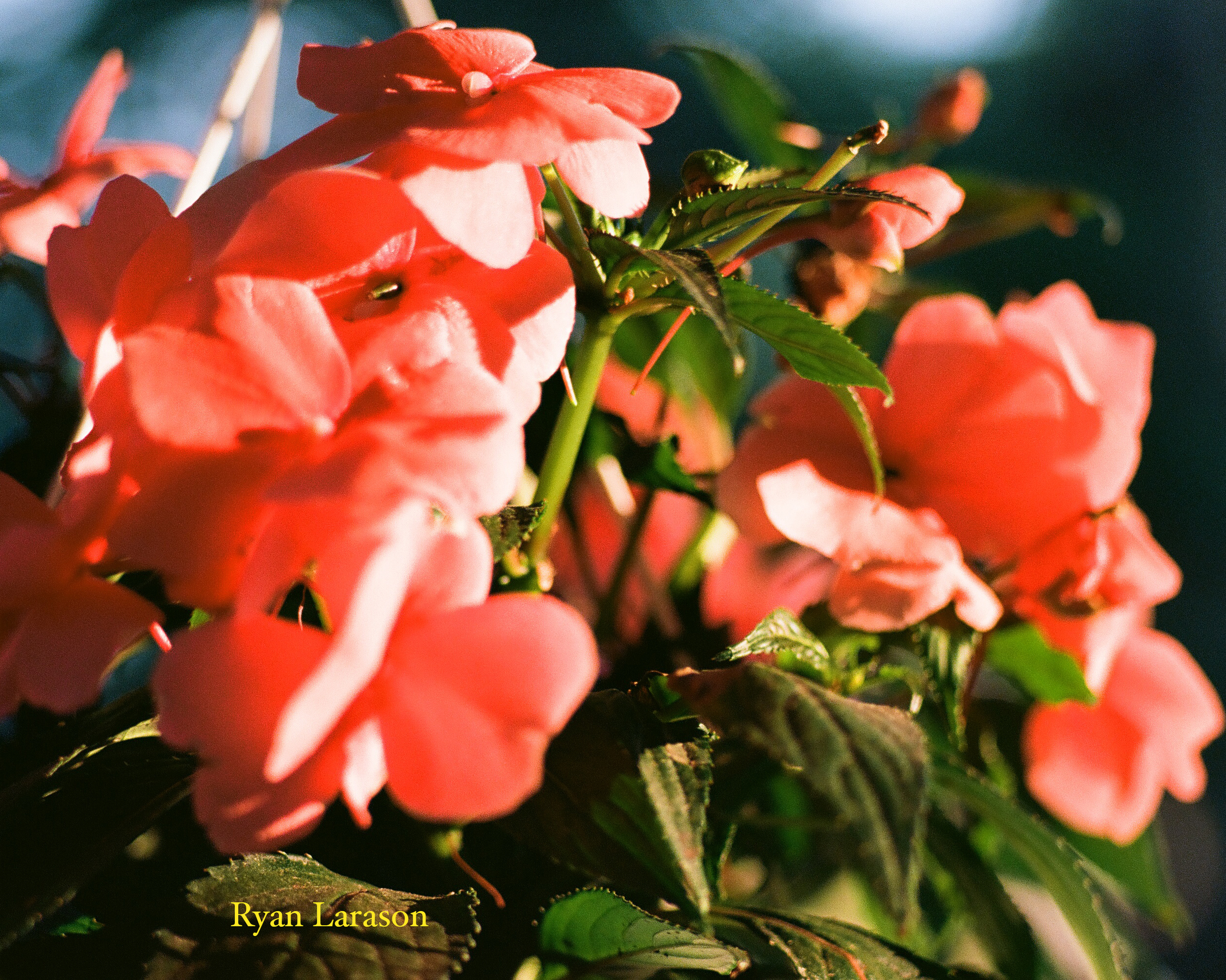 Red Flowers_8x10_WM.jpg