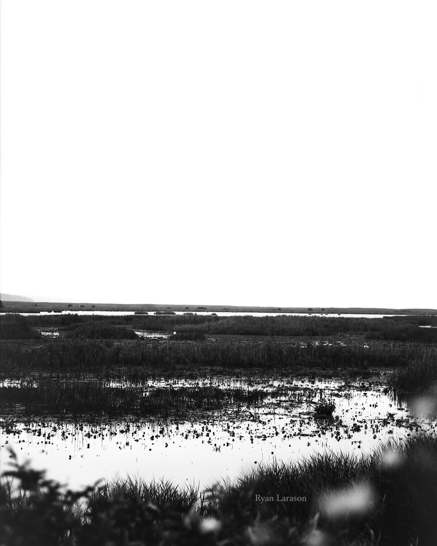 EBF Wetland 1_8x10_WM.jpg