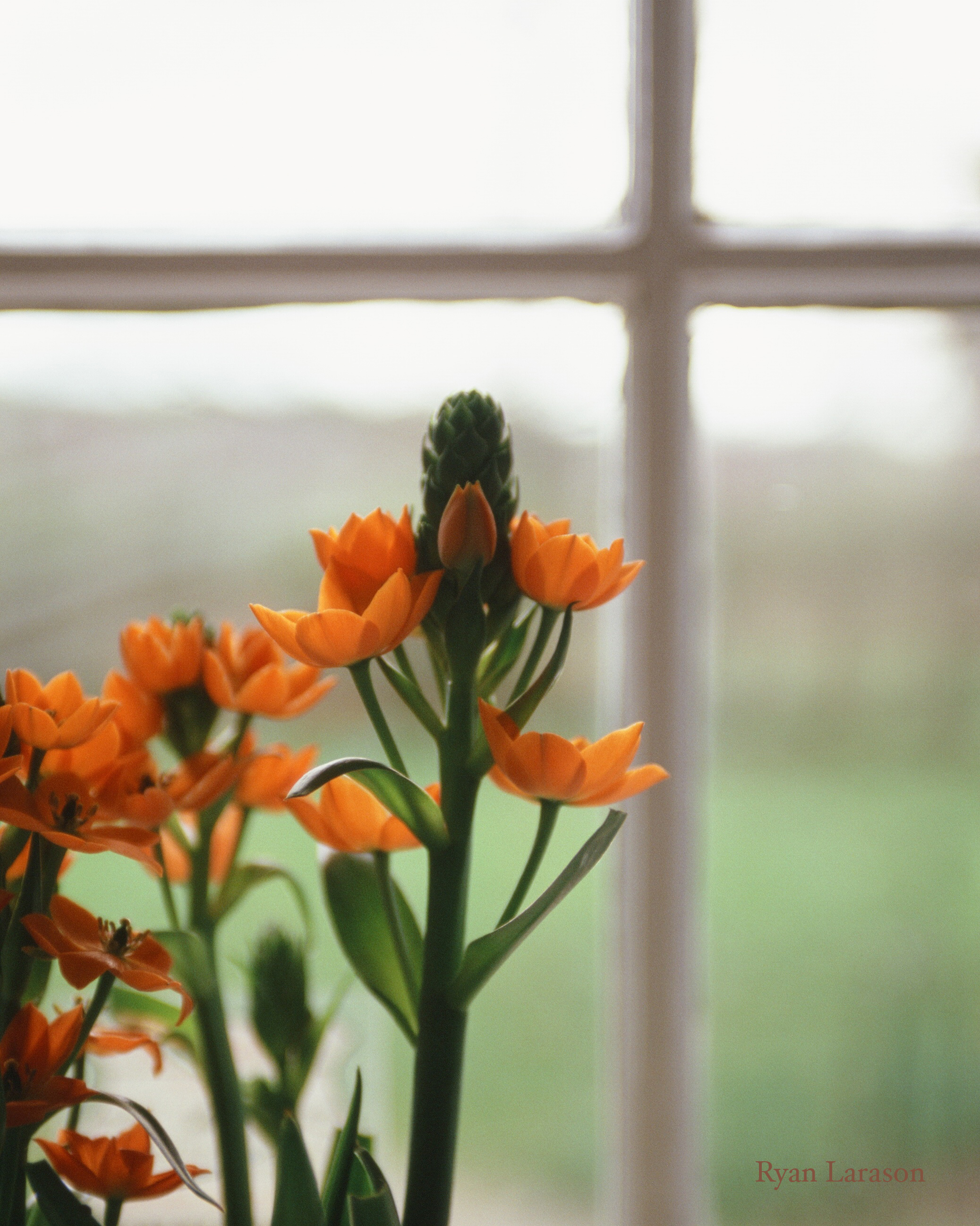 Flower by window_8x10_WM.jpg