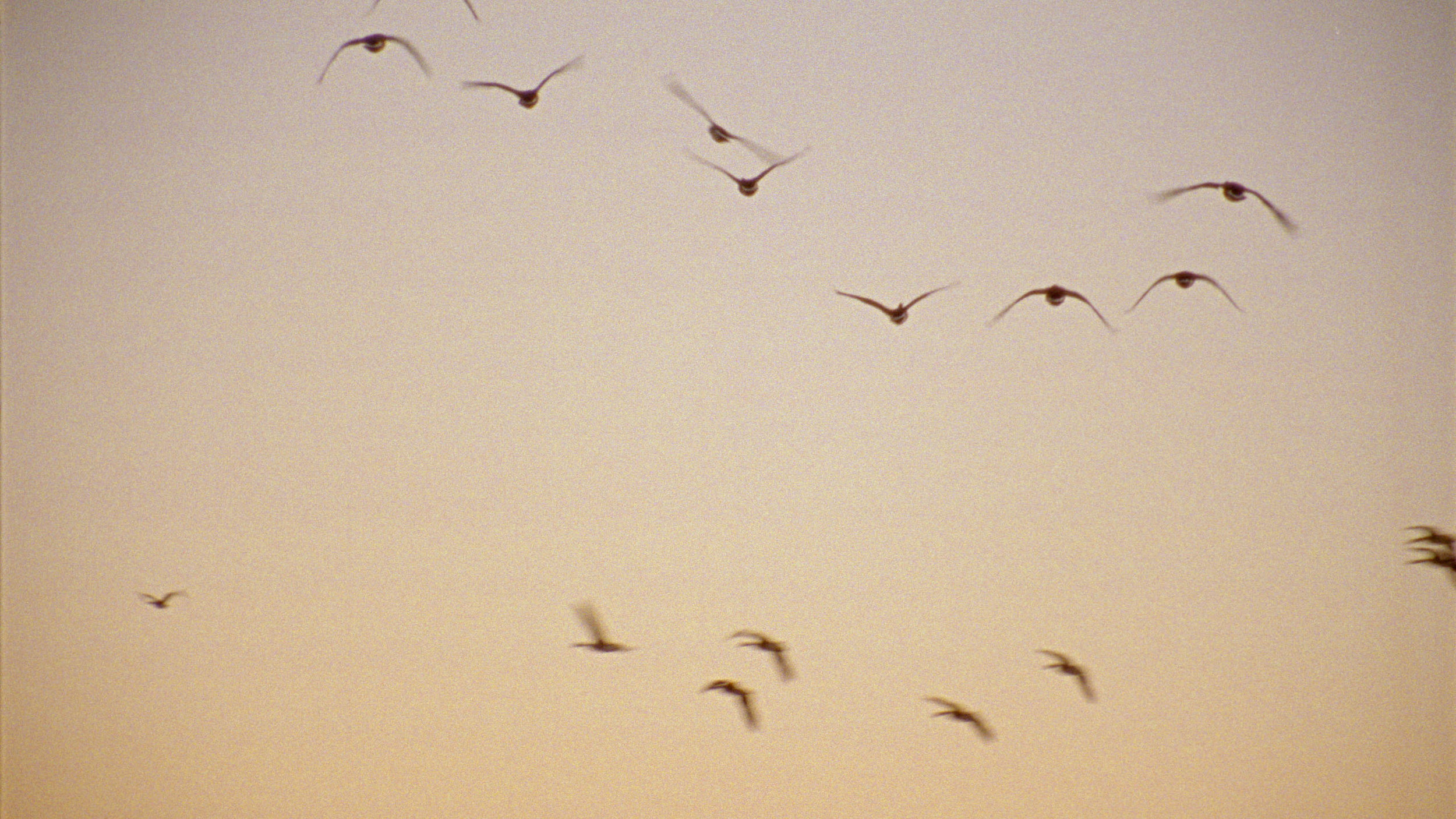 Geese Flying Away.jpg