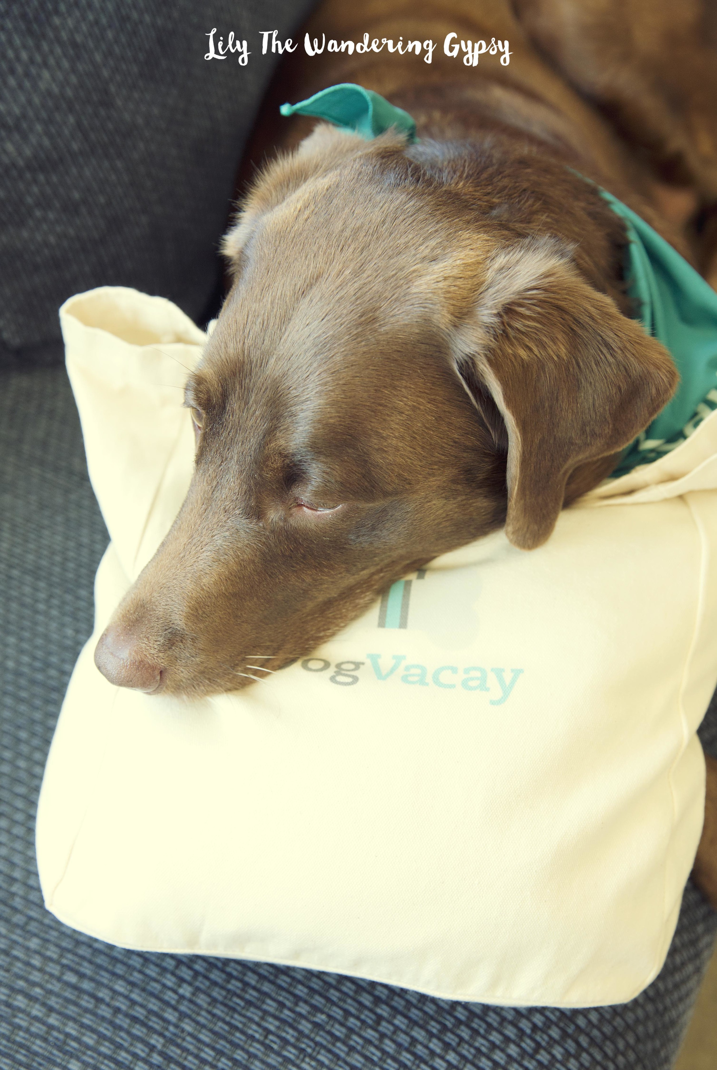 Cabbie + Her DogVacay Tote Bag
