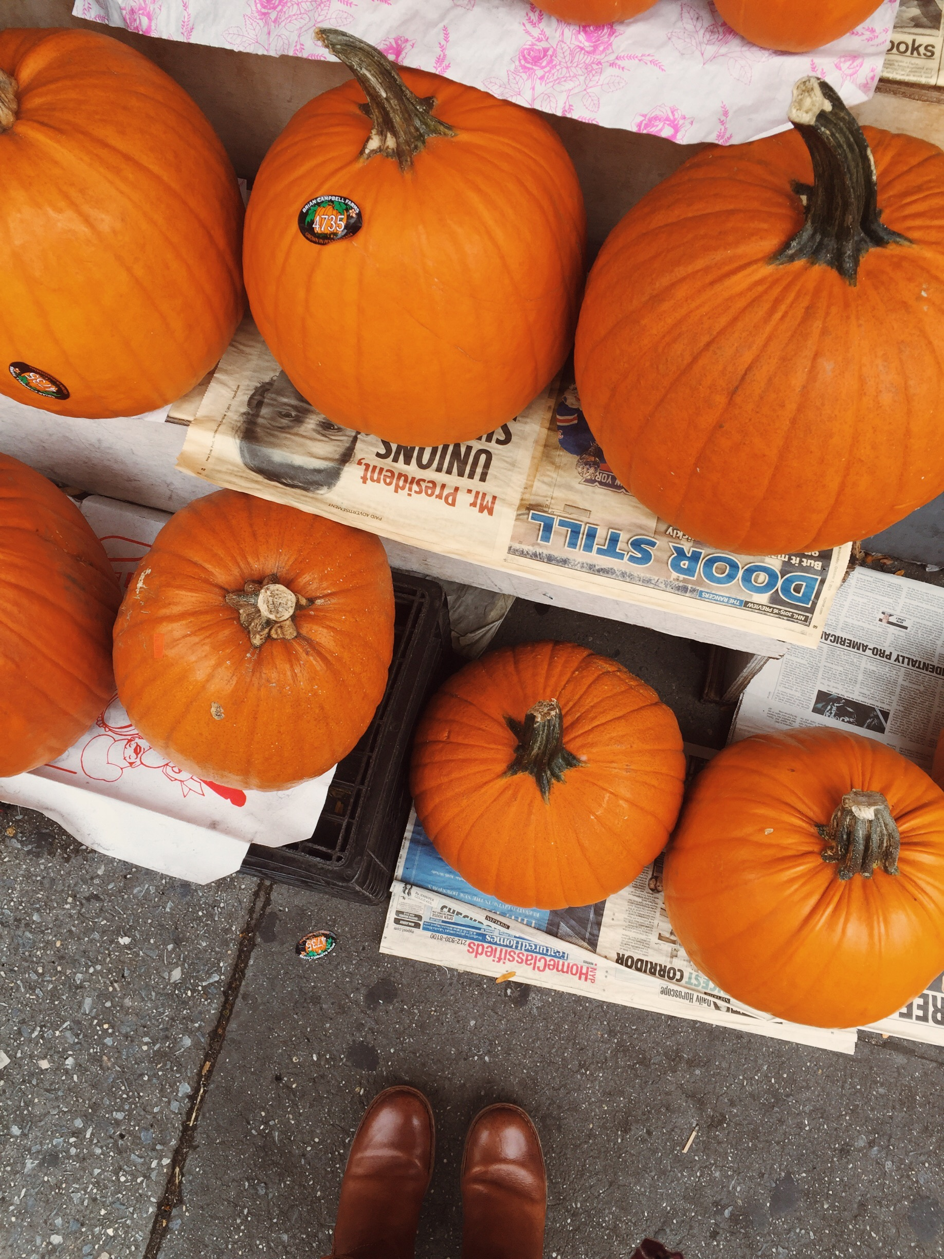 Pumpkins in NYC