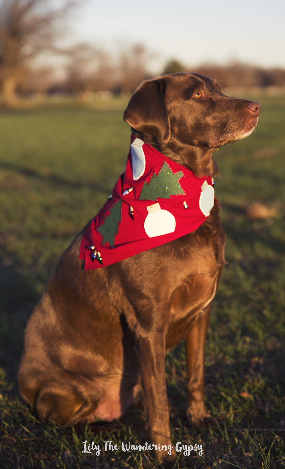 Holiday Dog Bandana