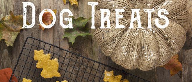 Organic Pumpkin Oat Dog Treats (My Most Popular Post)