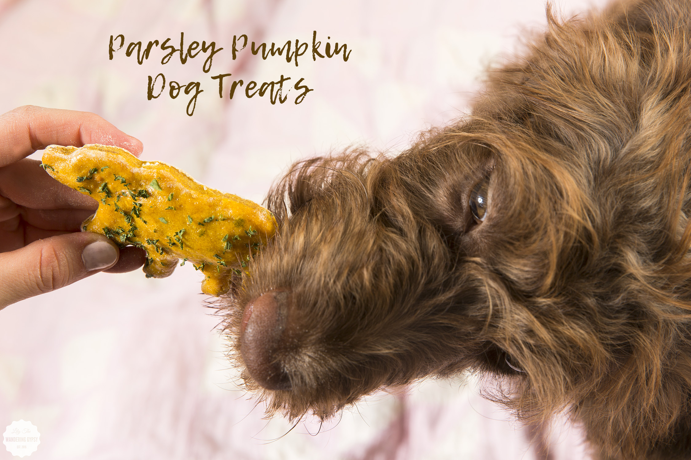Great Dog Treat Recipe