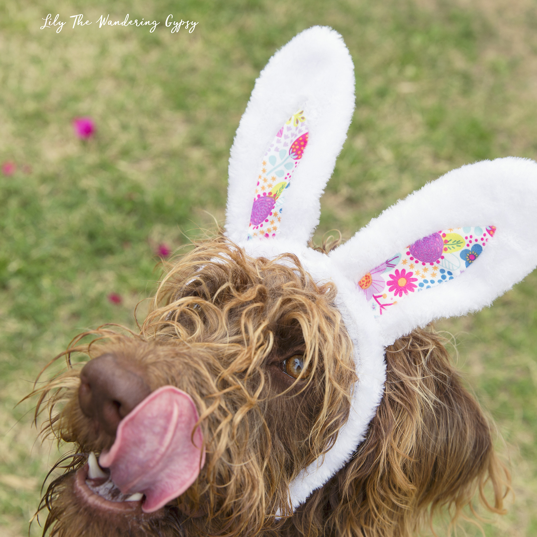 Dog Friendly Easter Basket DIY