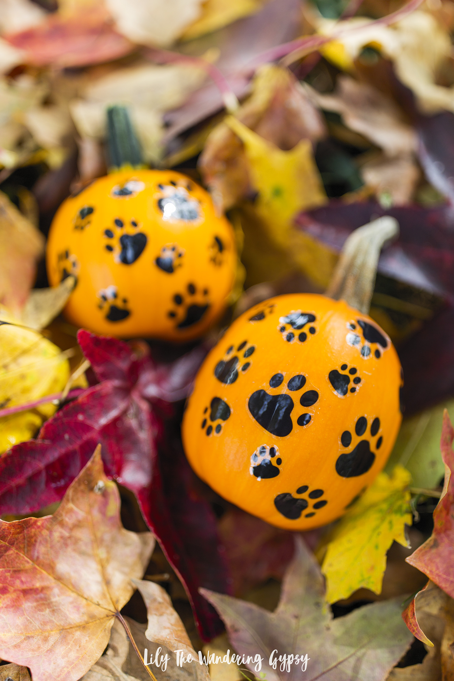 DIY Decorated Pumpkins For Your Dogs
