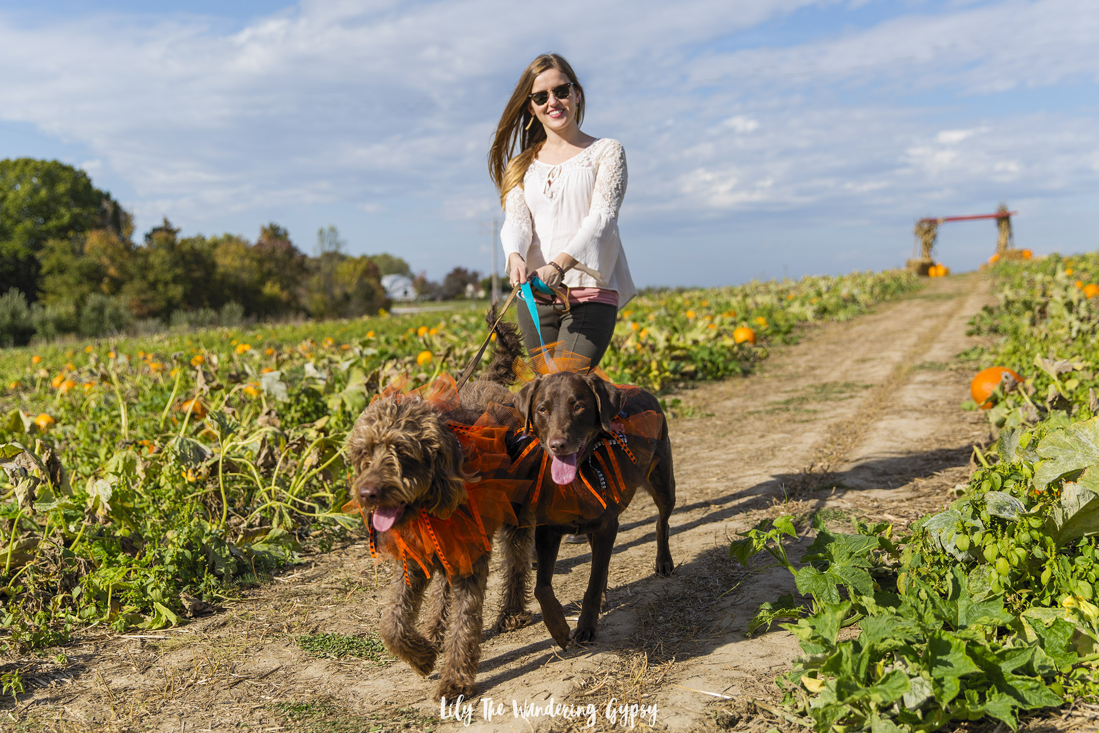 Walking the dogs in the pumpkin patch