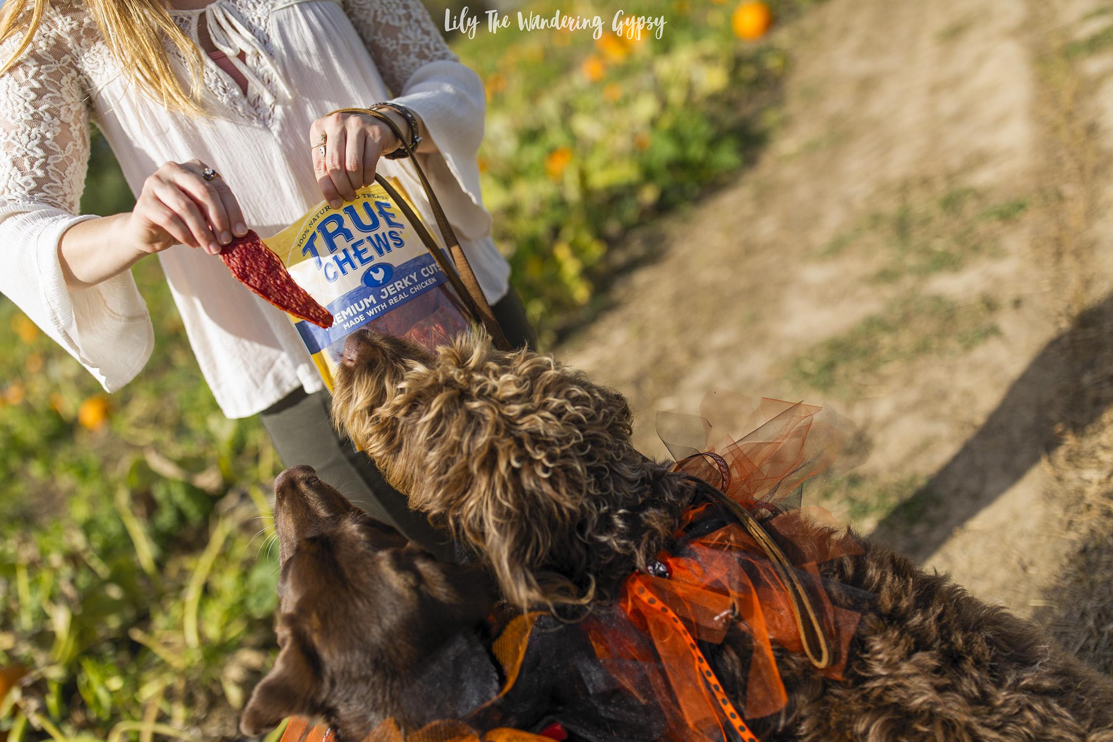 Treats At The Pumpkin Patch