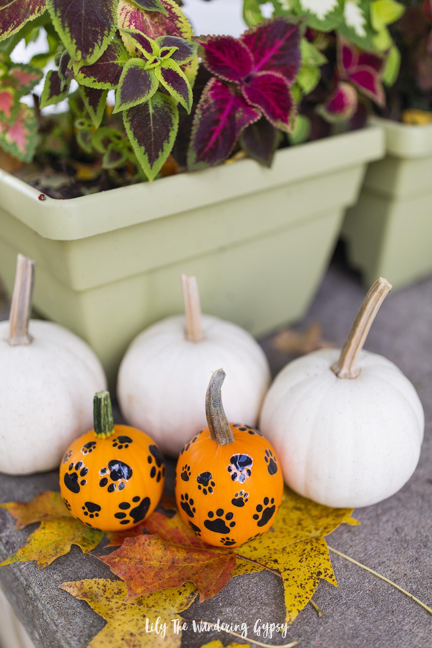 DIY Pumpkins For Dogs