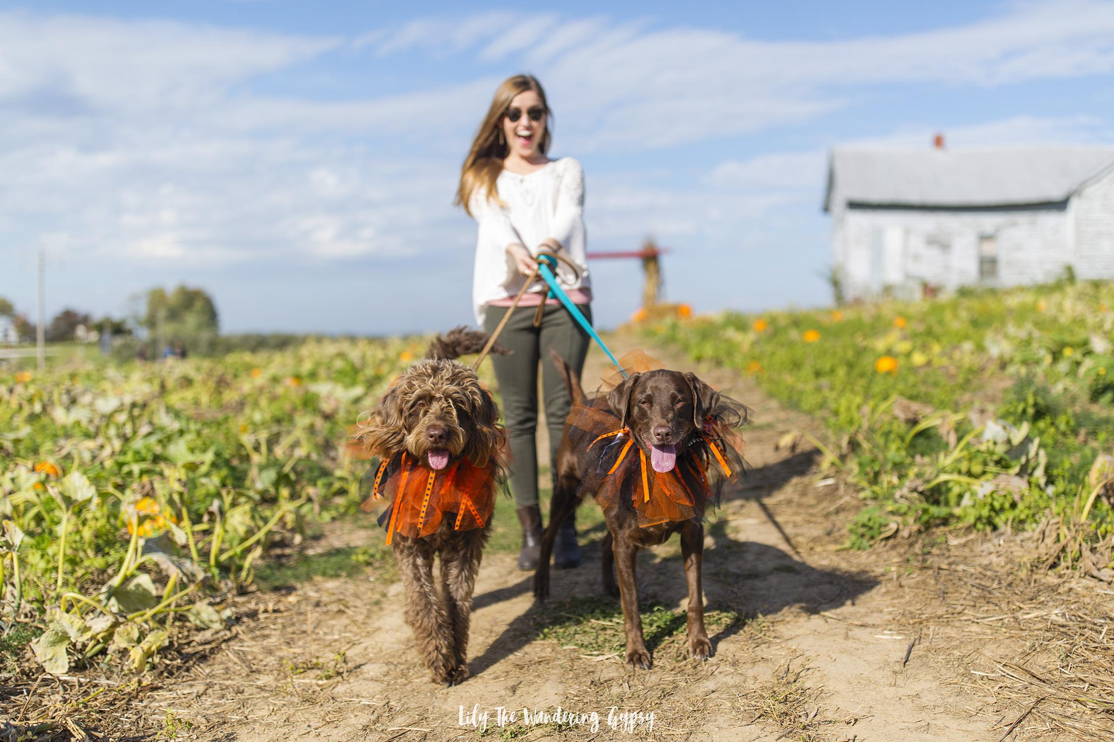 Walk in the pumpkin patch