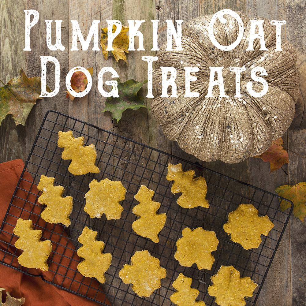 Pumpkin Oat Dog Treats