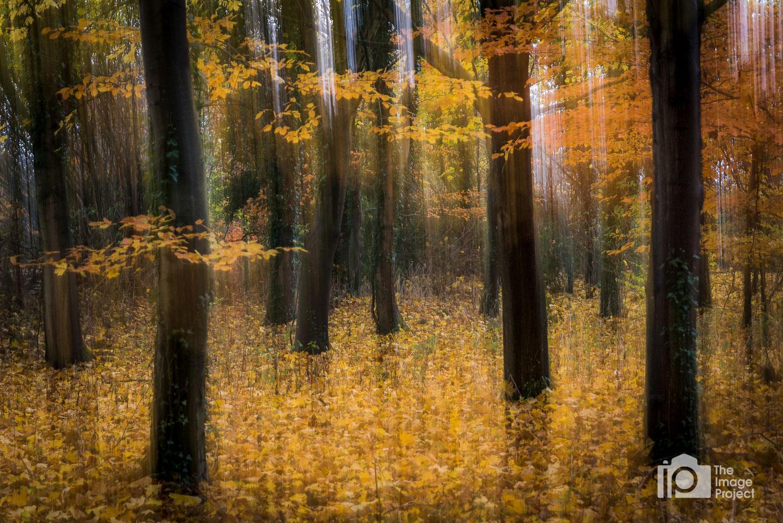 Autumn Impressions, Broughton