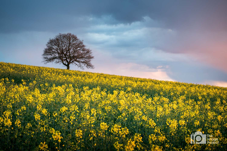 Bursting spring colours, near Banbury