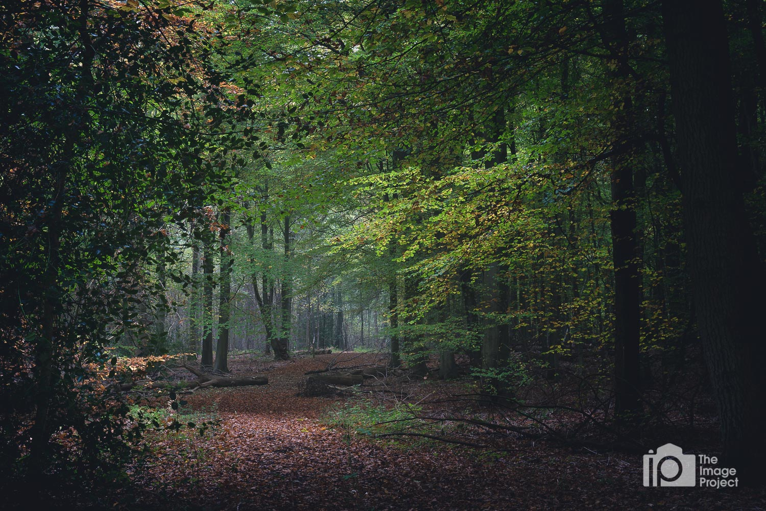 Winding forest path, Northamptonshire