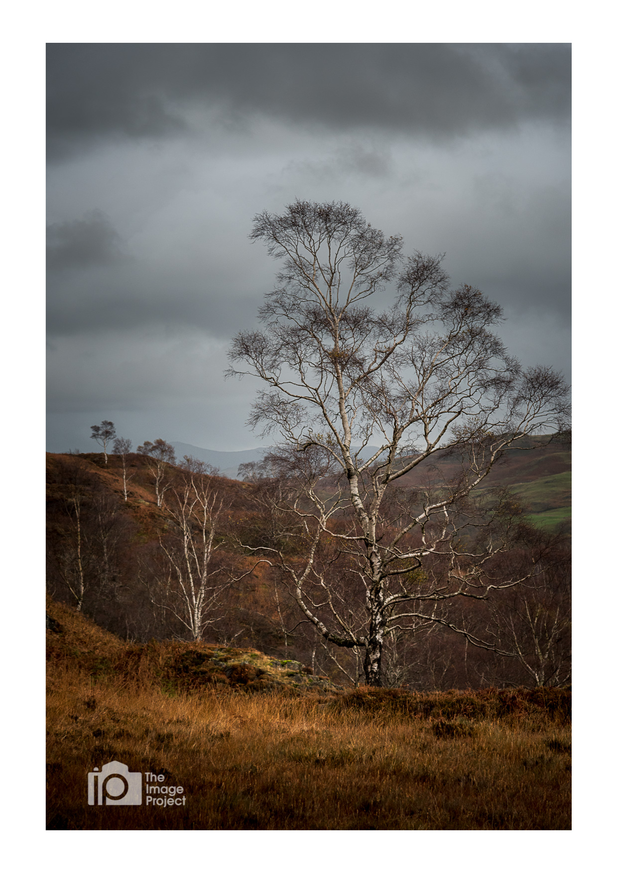 Tree perspectives, Holme Fell