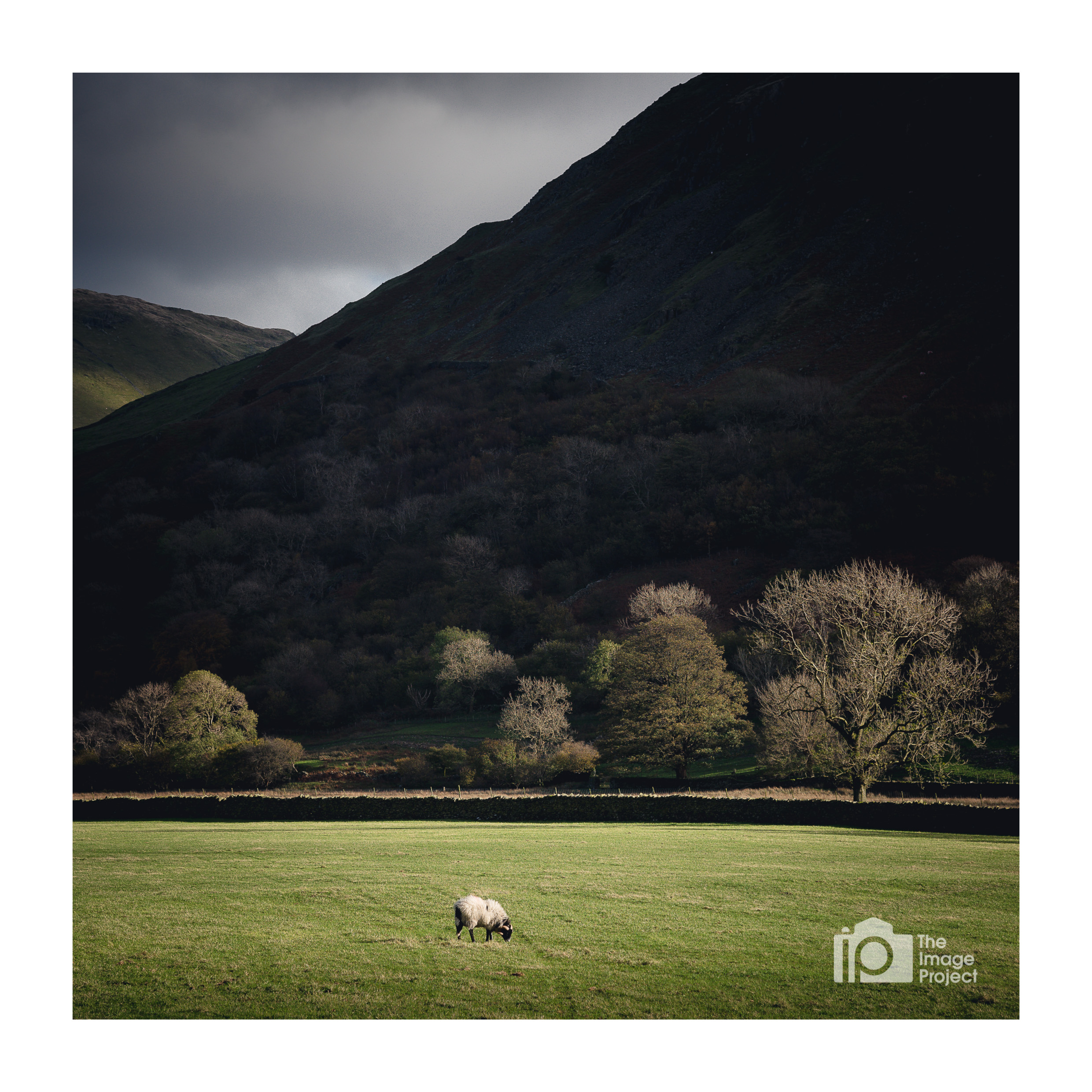 Lone sheep in afternoon light, Brotherswater