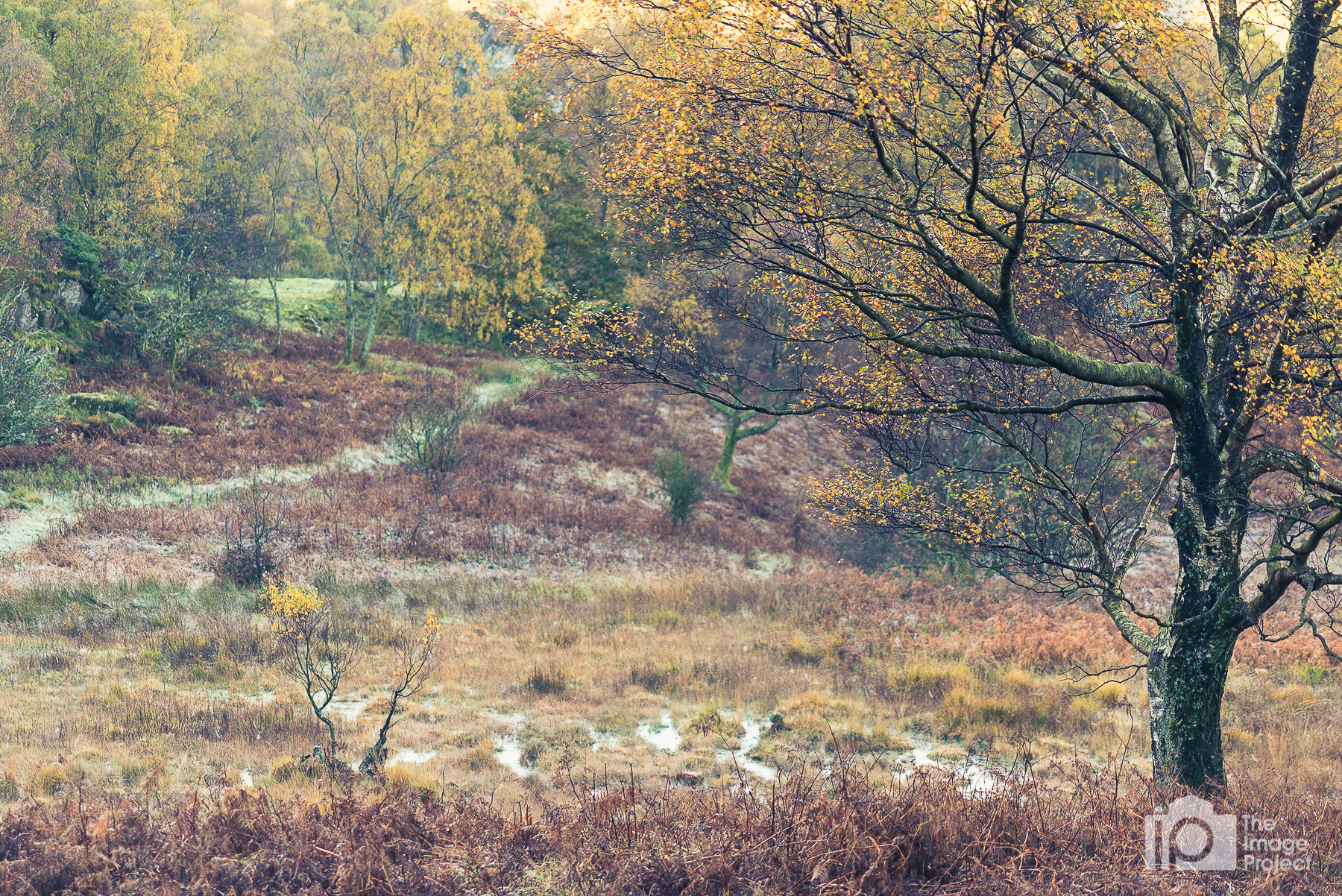 Morning haze, frost and colours in Borrowdale