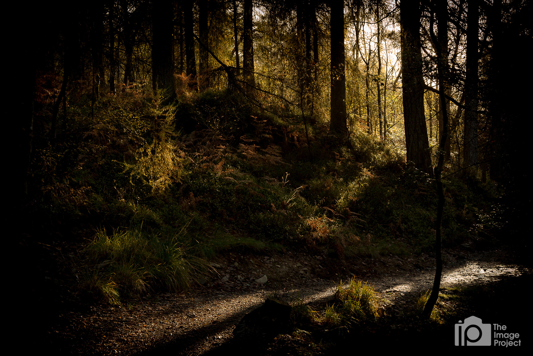 Morning sun finds its way through the forest