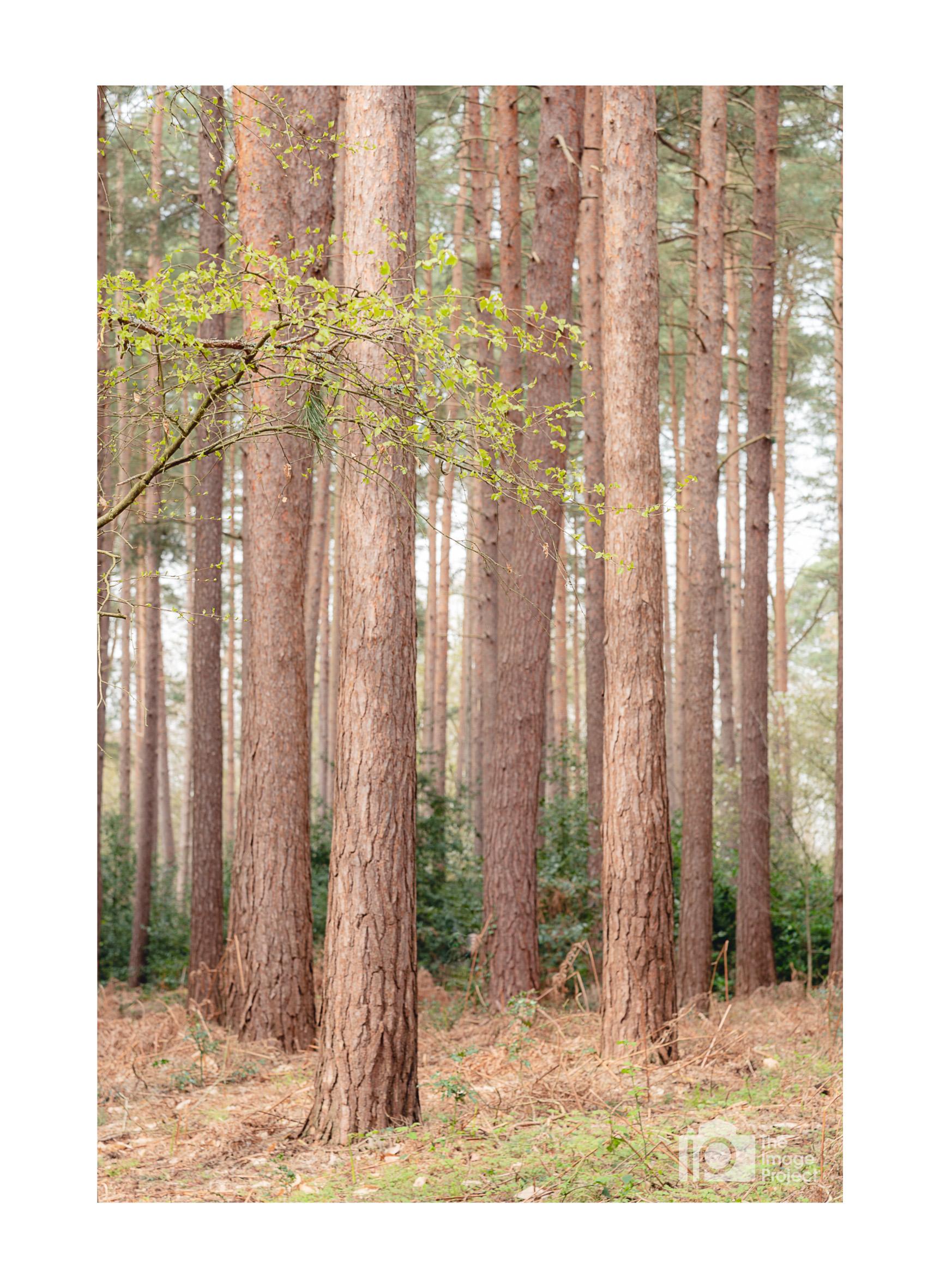 Windsor trees 6 apr 2019.jpg