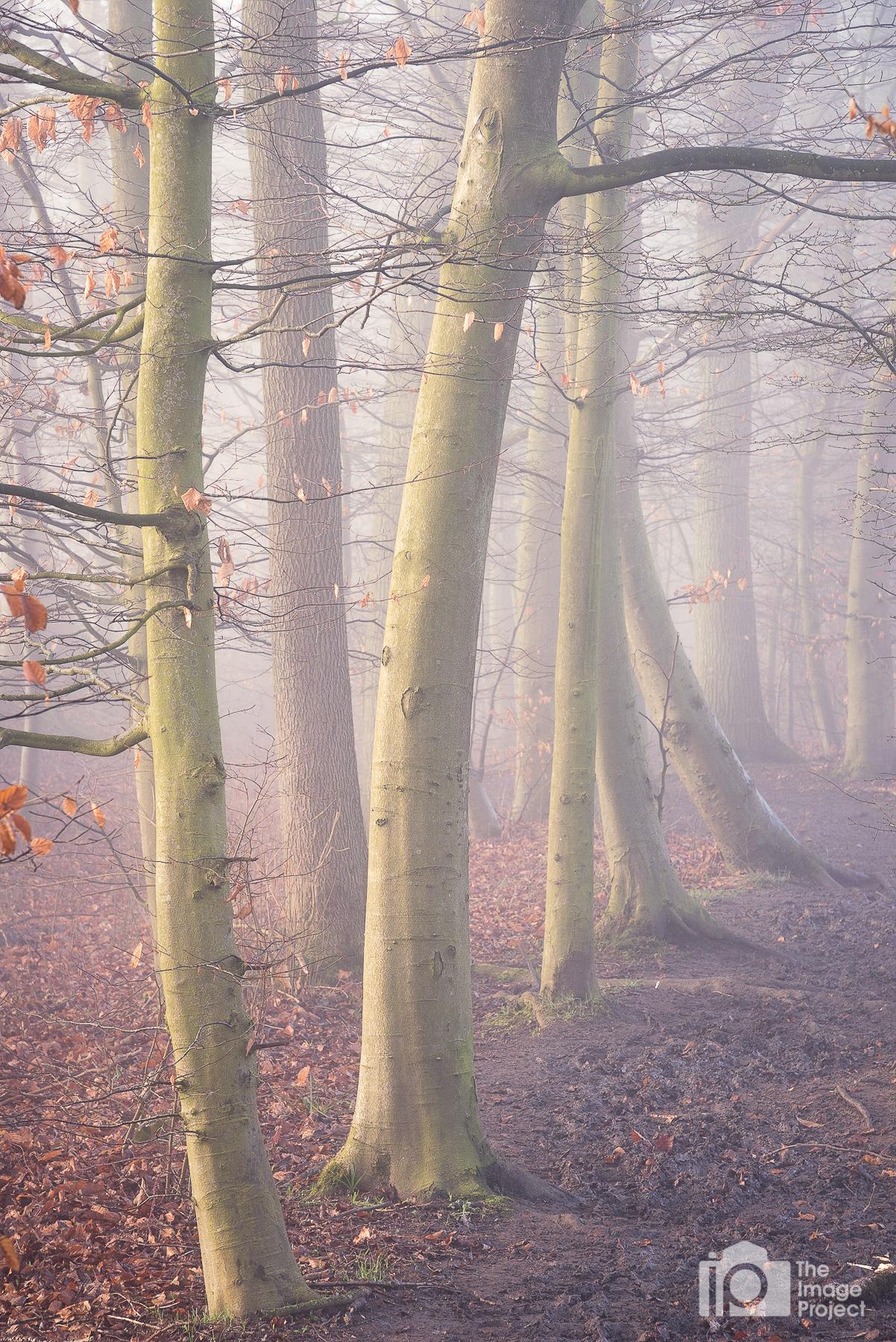 Misty pathway, Northants