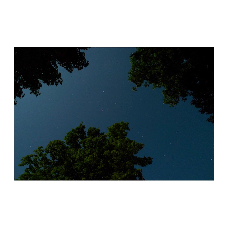 treeking.jpg