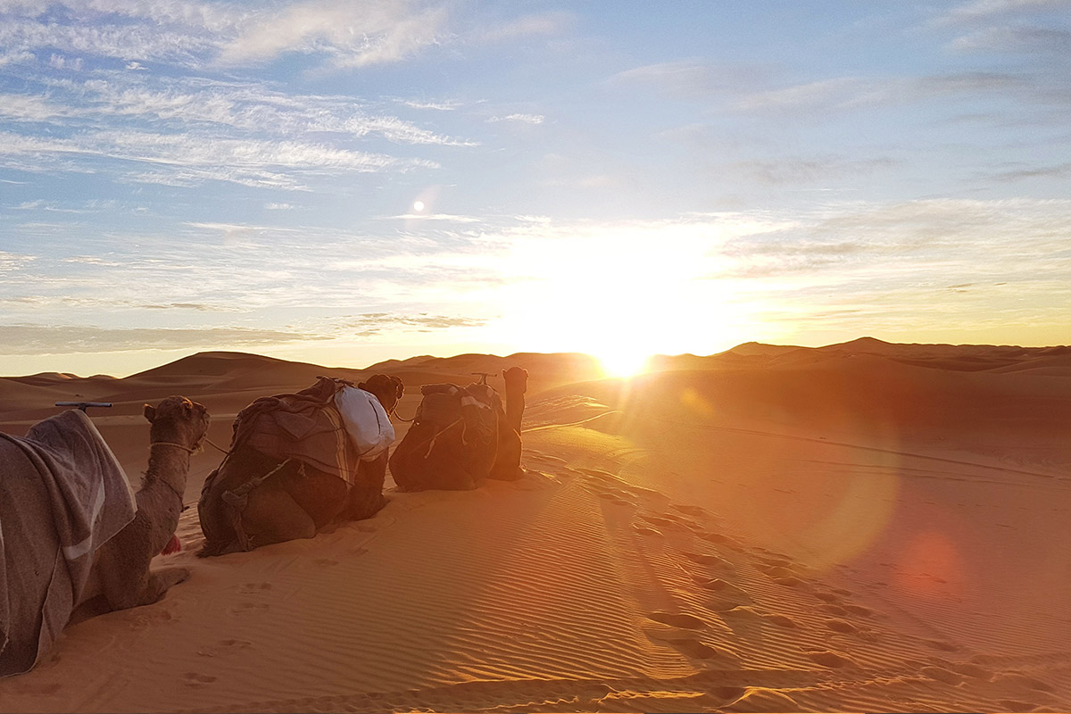 Chasing Sunrise in the Sahara - There's no other way we'd want to kick off 2019 than chasing sunrise out in the Sahara. We'll head out damn early (or stay up all night) and summit the dunes to catch the first sunrise of the year.Optional sandboarding and camel rides included!