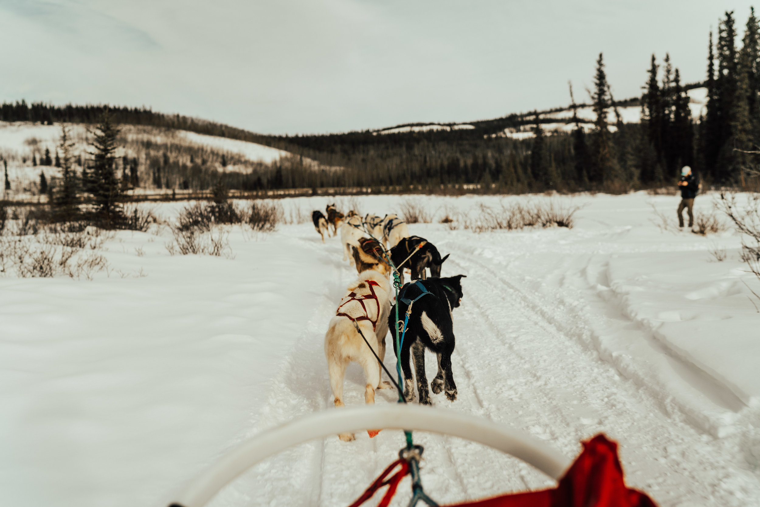 DOGSLEDDING - Up north, the huskies are waiting for you! Visit with dog sled teams or experience the rush of a guided dog sled tour. We support several fantastic local dogsledding operators.Activity based on availability.Time: 3.0 hoursCost: $275 including transportation