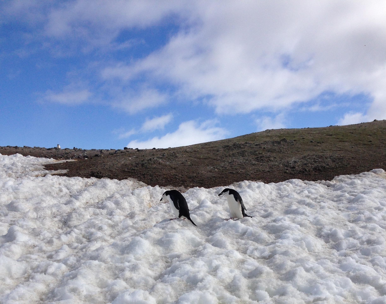 Penguins, Enterprise Island, Antarctica