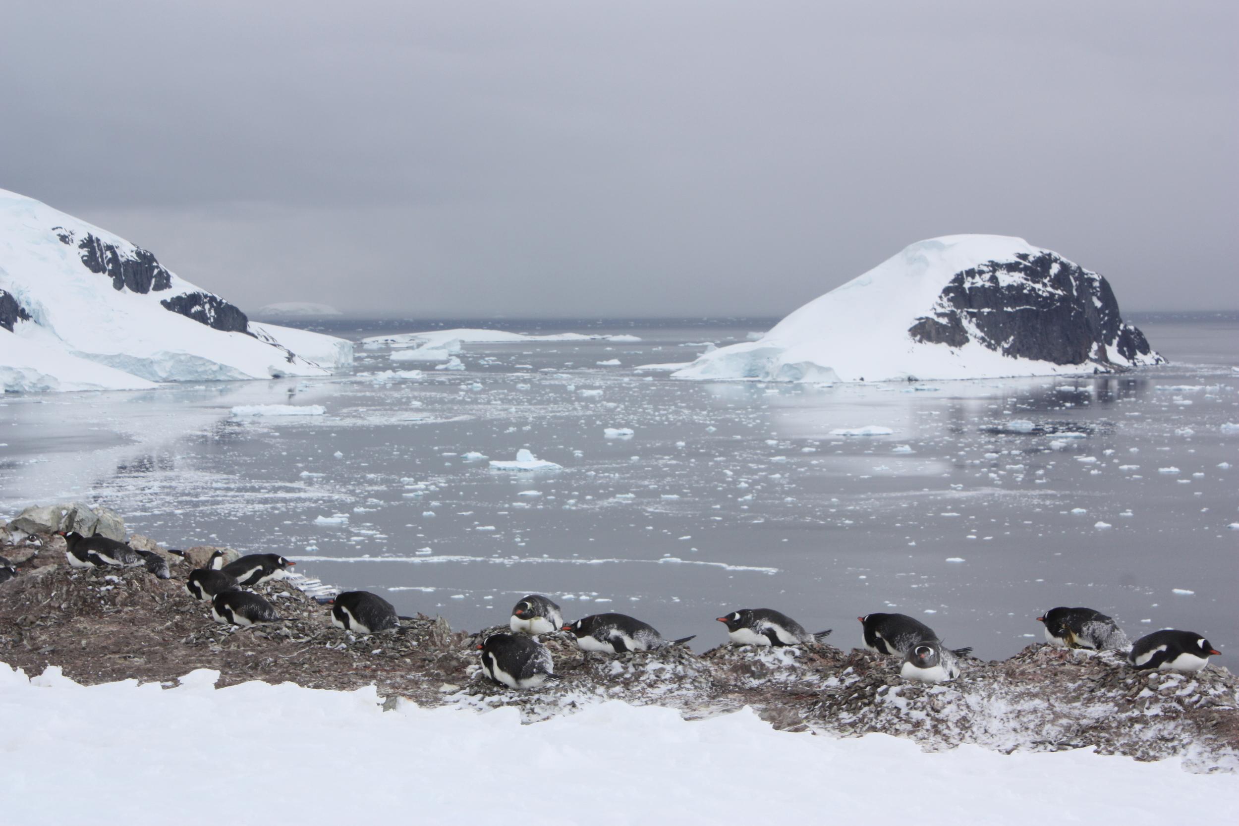 Penguin Colony, Danco Island, Antarctica