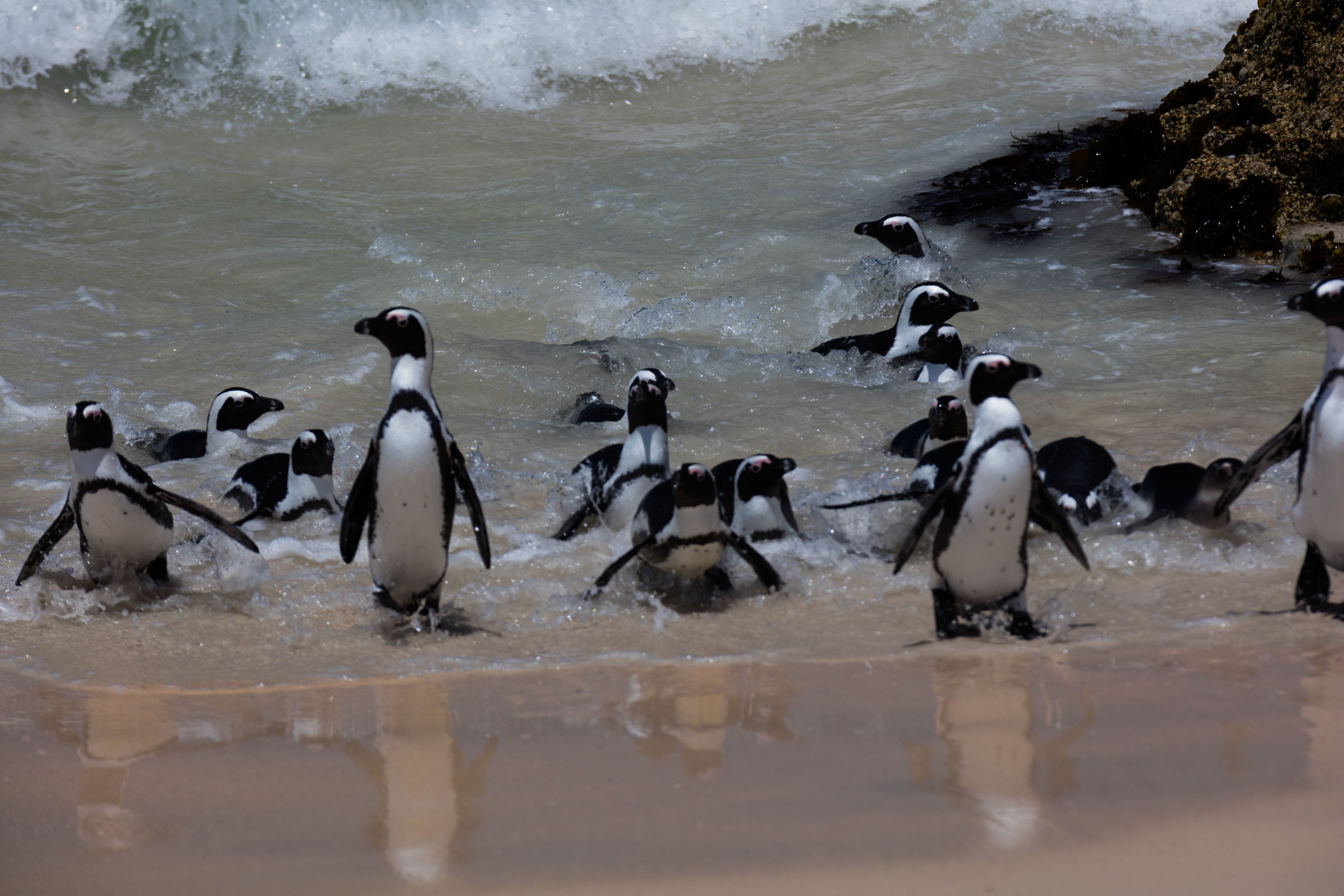 Penguin Colony, South Africa