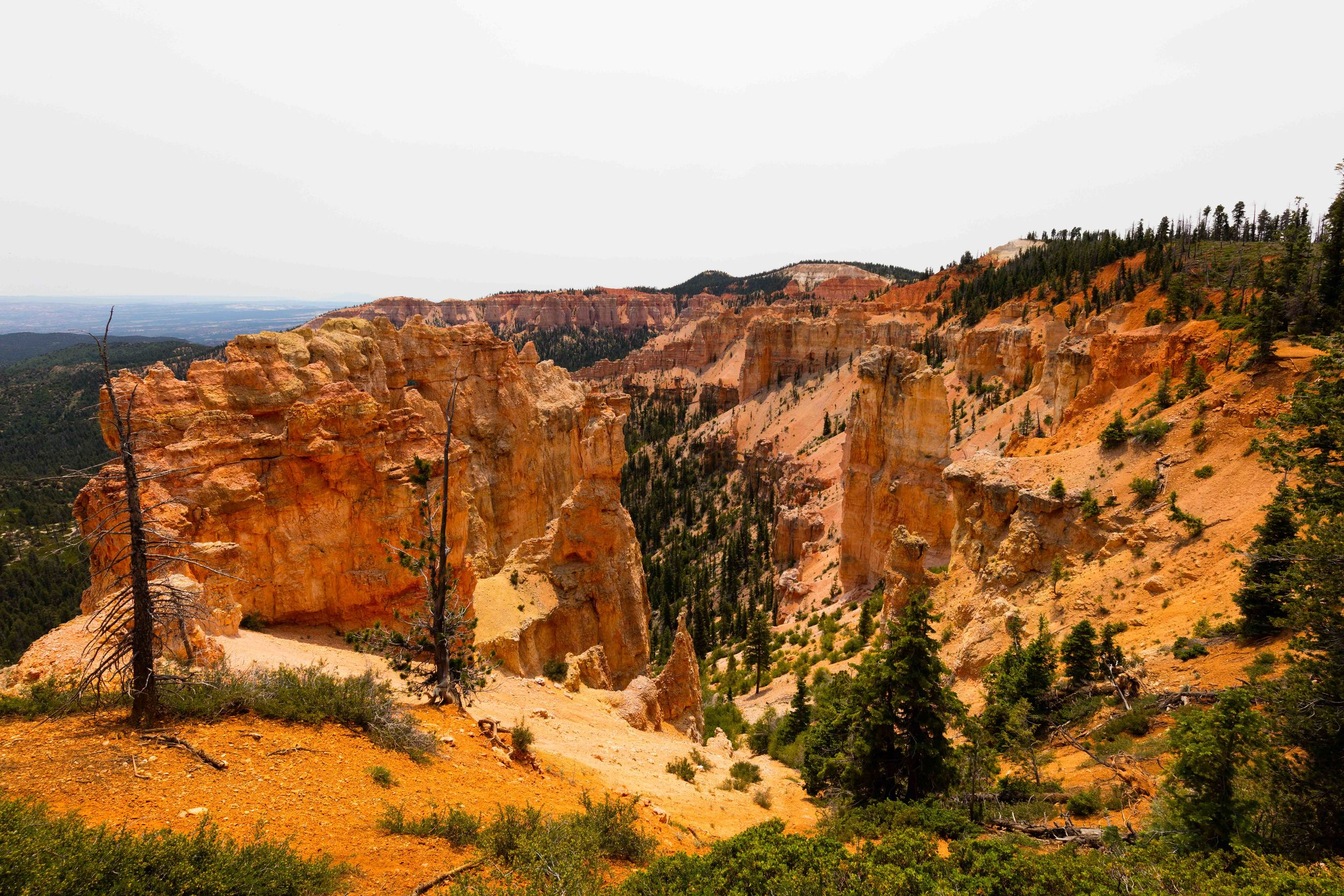 Blackbird Birch Canyon, Bryce Canyon