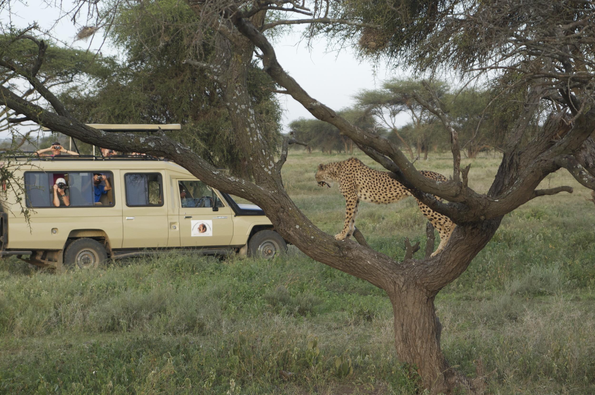 Join A Safari    ⬇︎