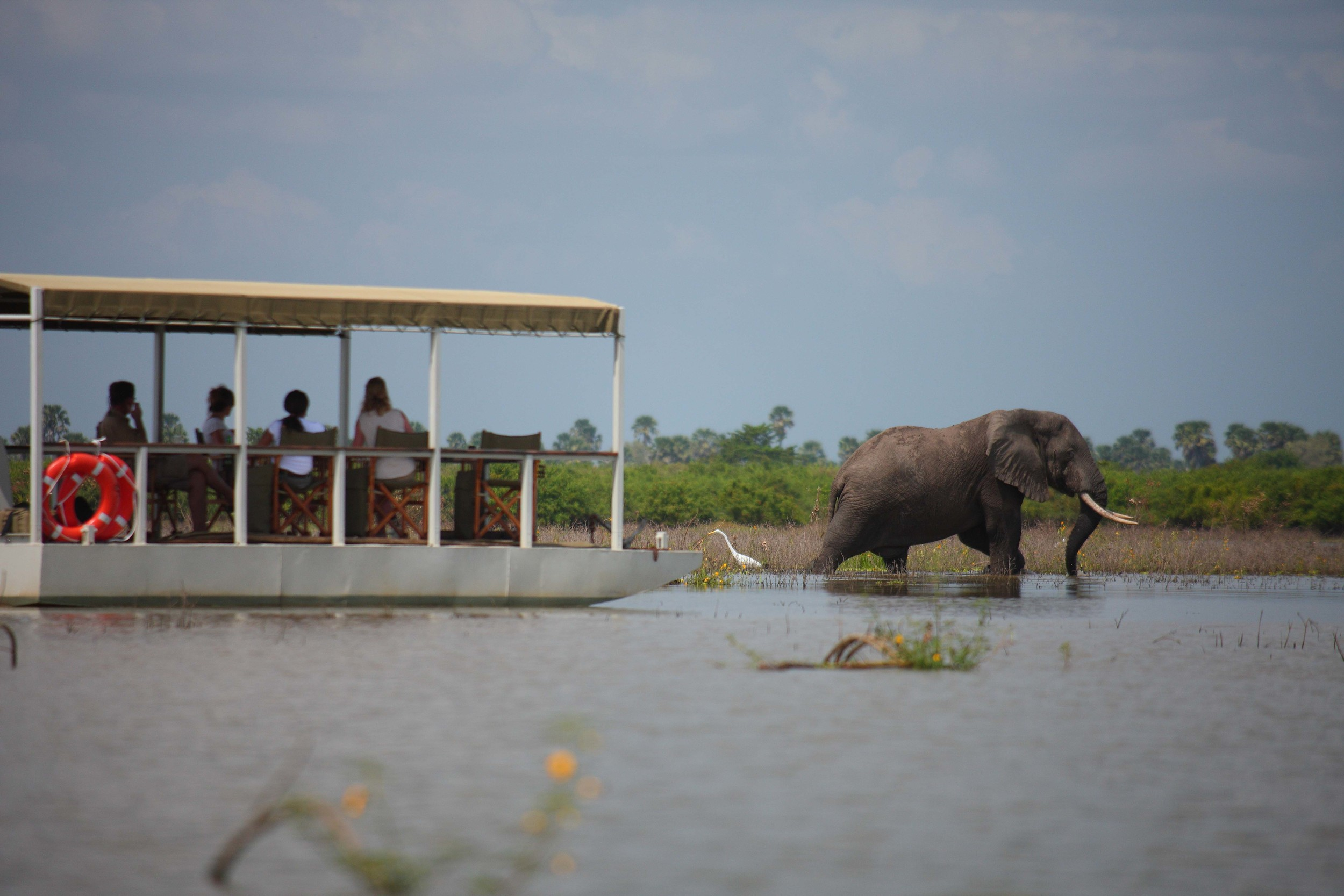 Perfect game viewing from Siwandu's pontoon boat.jpg