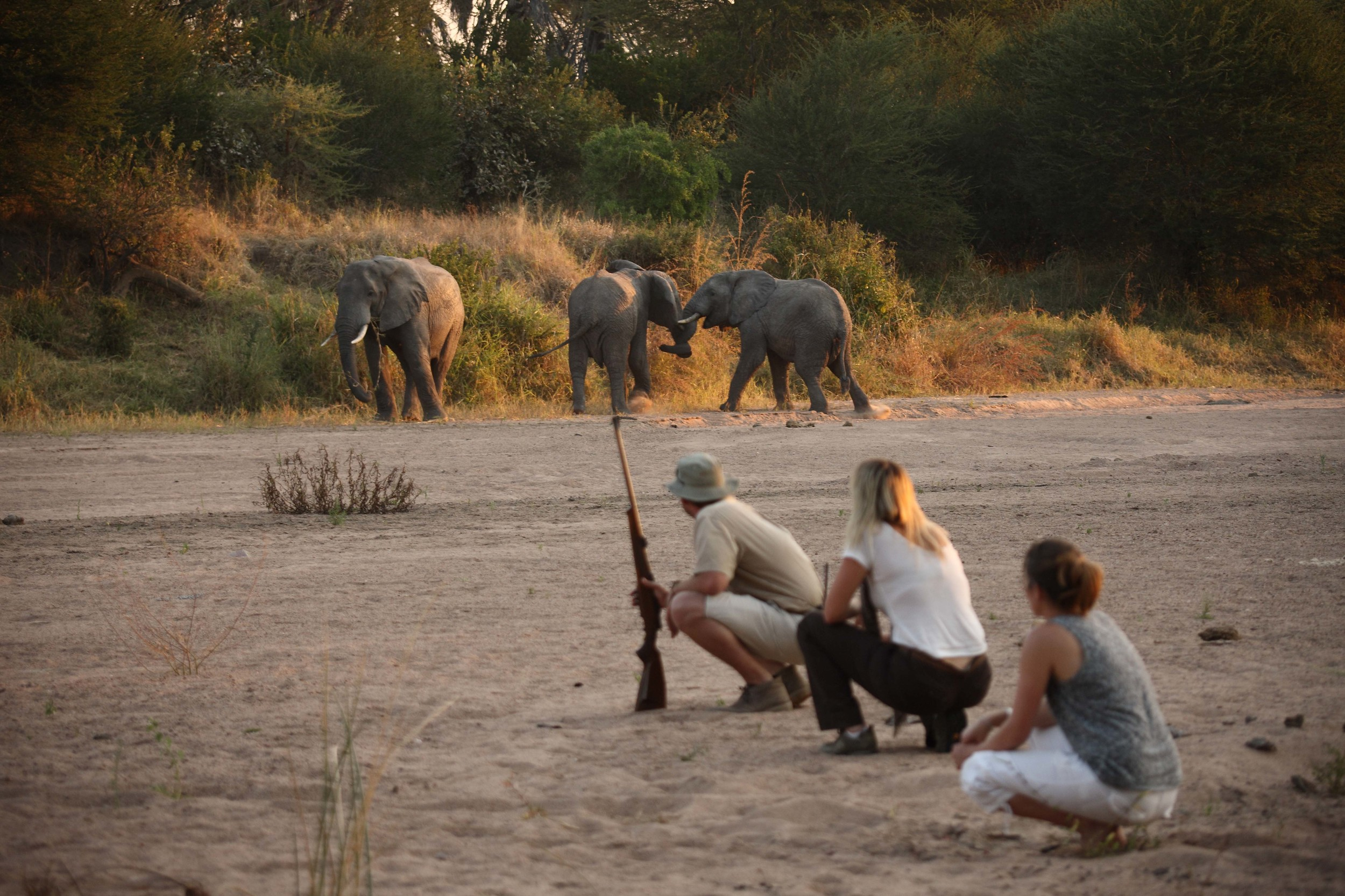 Get upclose and personal with game walks at Ruaha.jpg