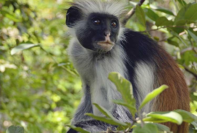 monkey-750x507.jpg