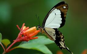 Photo, Zanzibar Butterfly Center