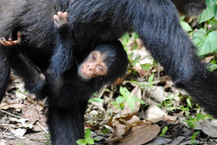 Mahale & Chimpanzees    ⬇︎