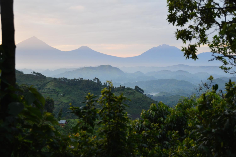 Uganda & Gorilla Trekking    ⬇︎