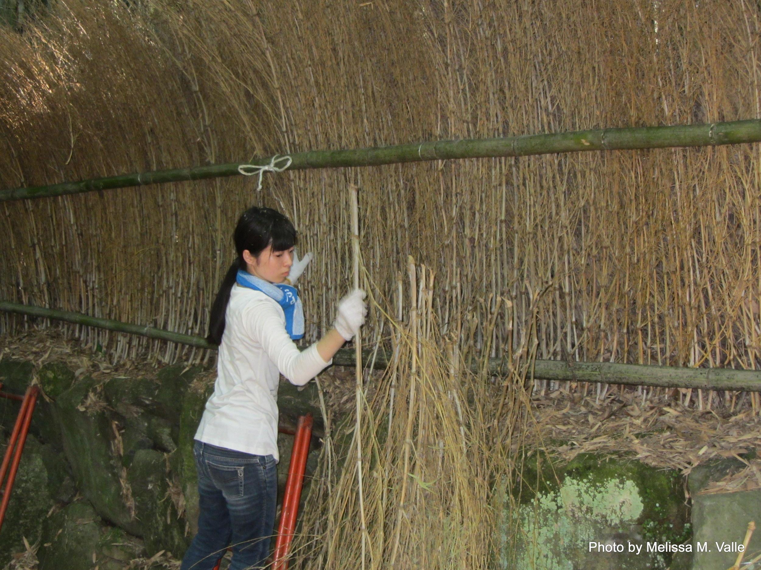 7.19.14 Kyoto, Japan- Arashiyama Bamboo Path (10).JPG