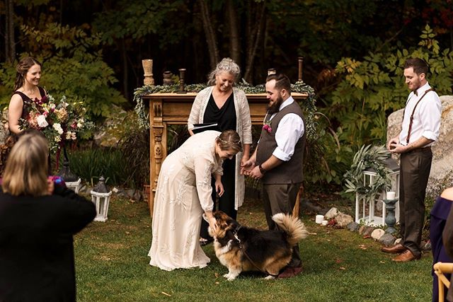 Fall weddings in New England with dogs as ring bearers are something I'll always fly back east for 💫