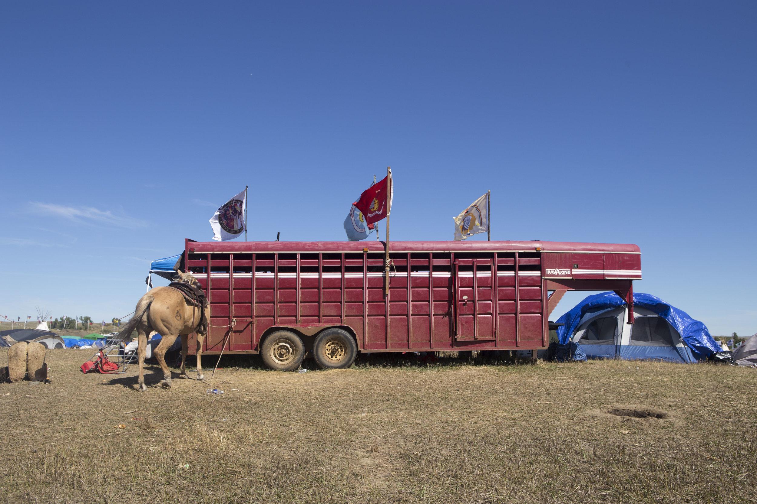 Horse @ Stall.jpg