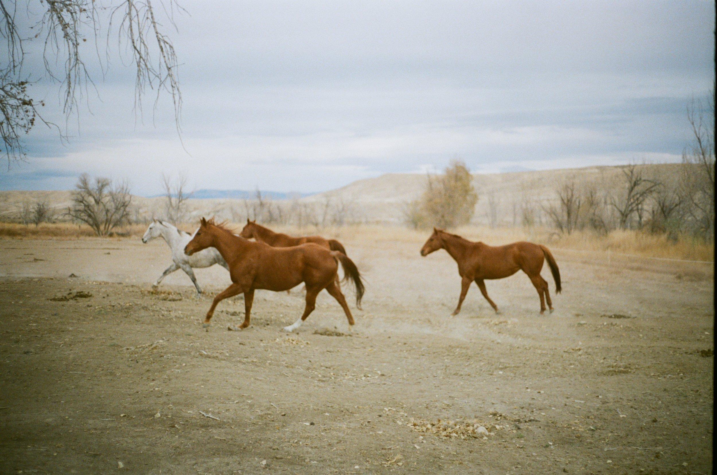 horses running up close.jpg