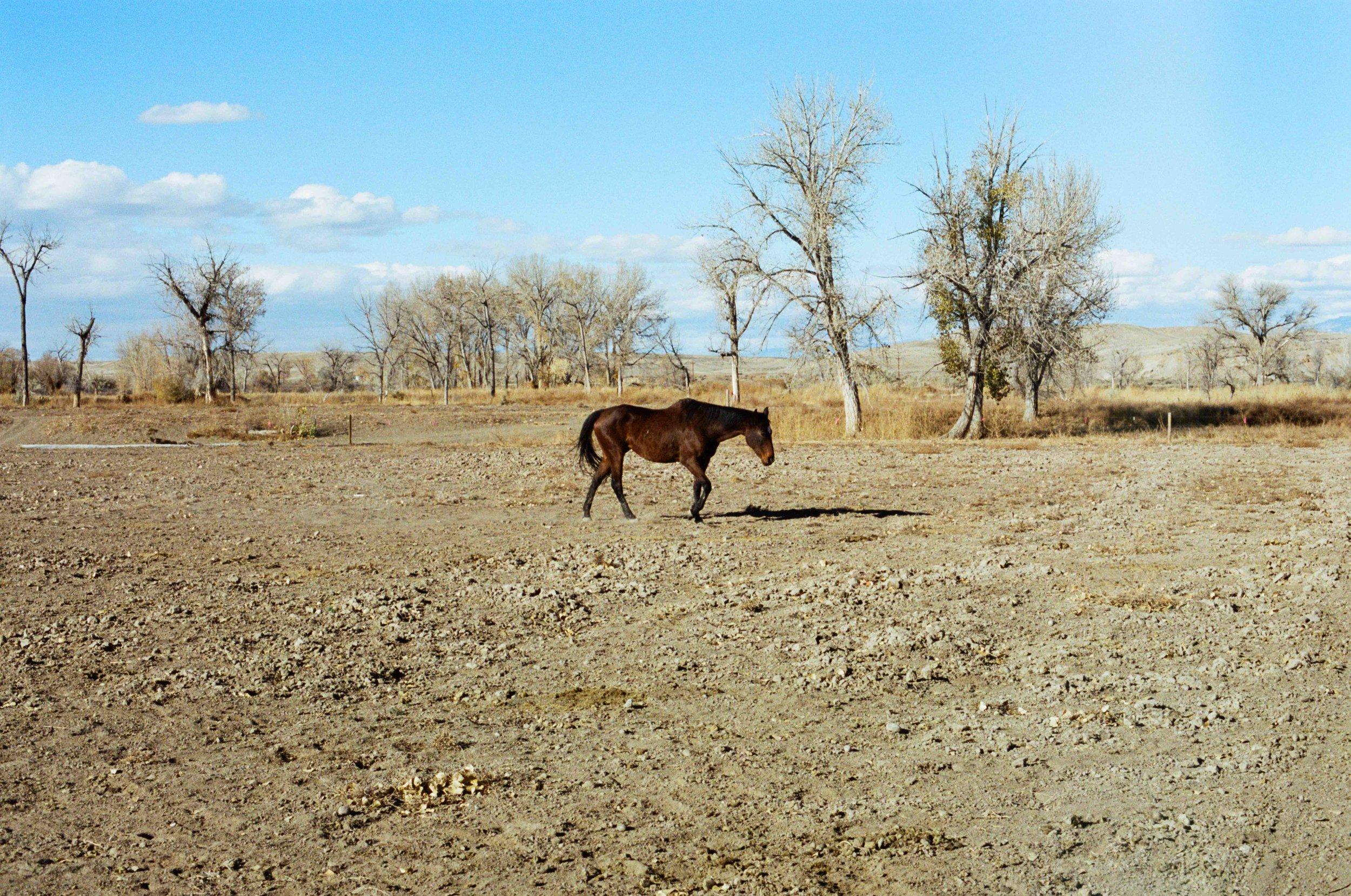 Horse Center.jpg