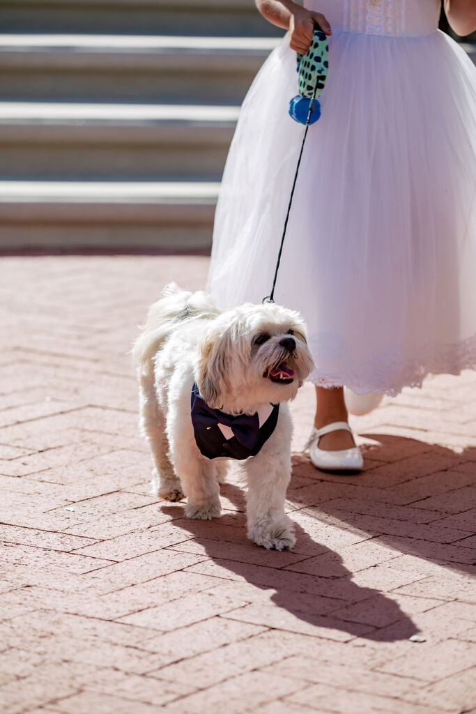 burlap-and-bordeaux-pets-at-weddings3.jpg