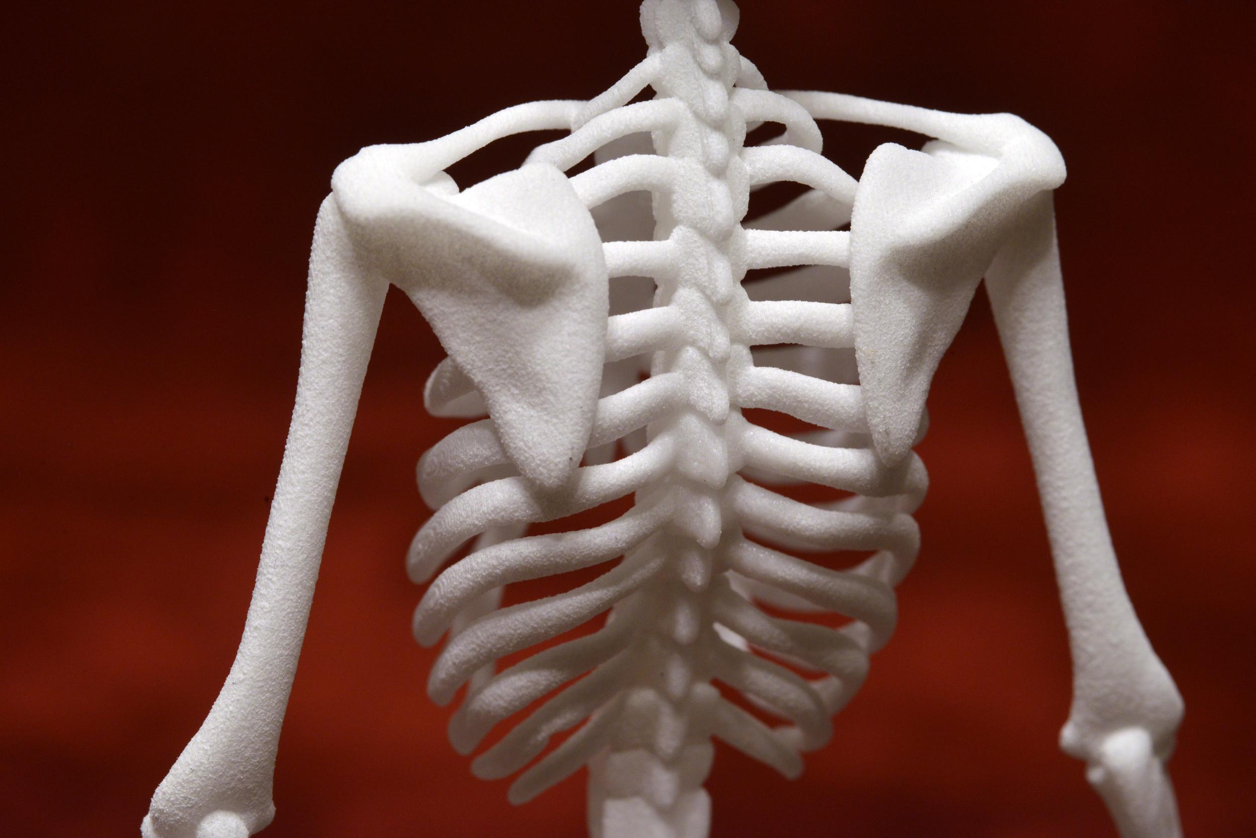 3D printed model skeleton